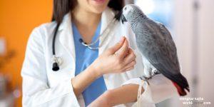 دامپزشک متخصص بیماری پرندگان زینتی طوطی