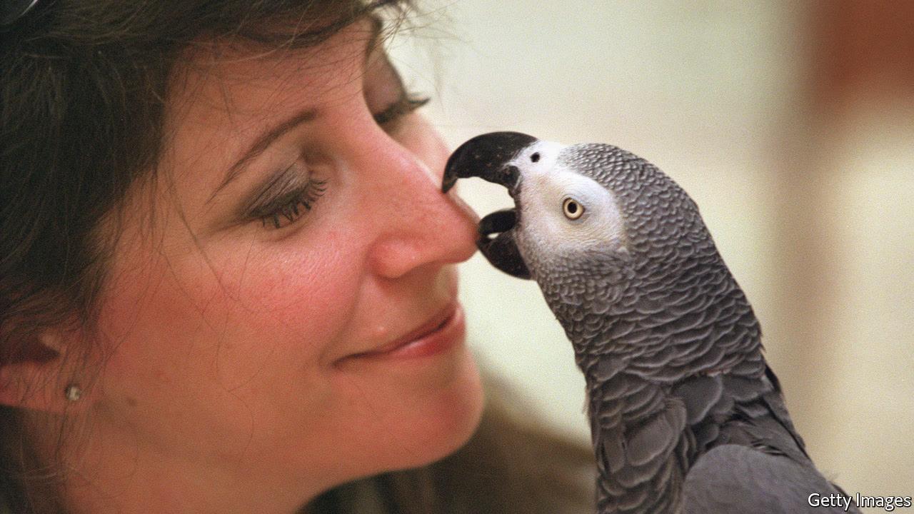 Alex Grey Parrot