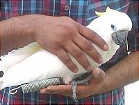 آتش نشانی طوطی امداد حیوانات