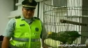 دستگیری پلیس طوطی