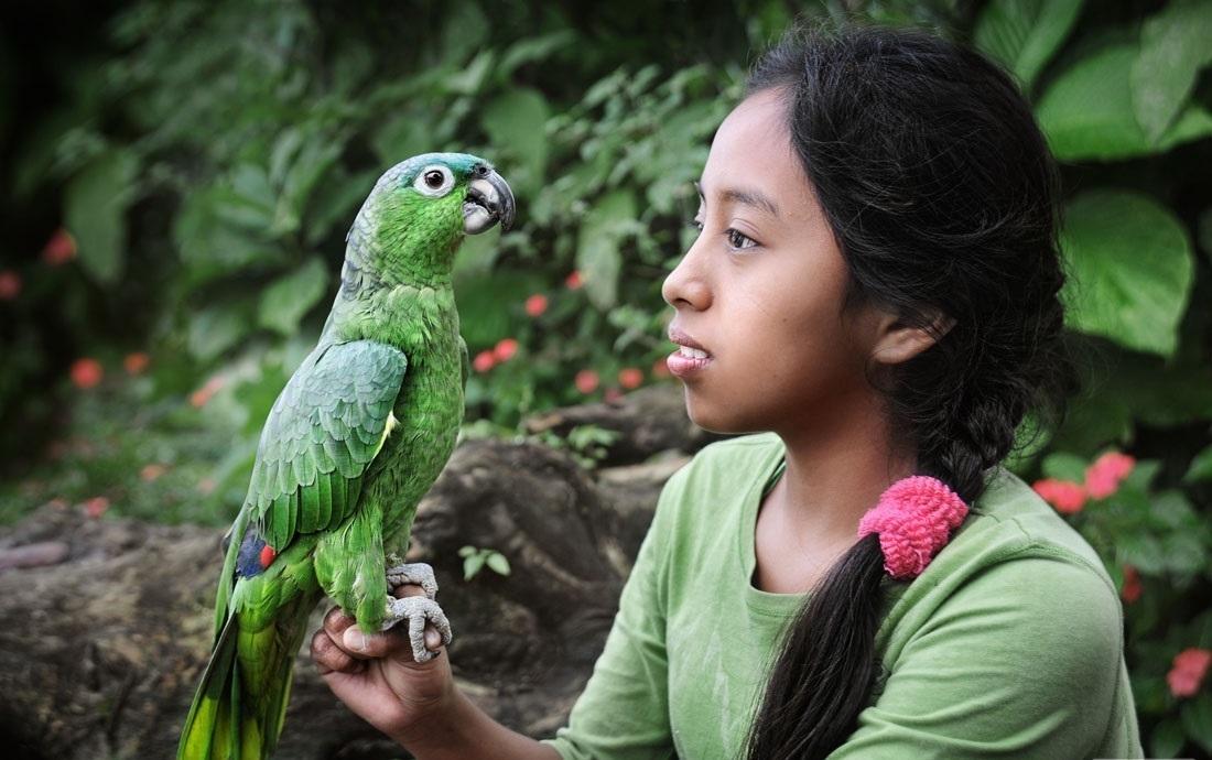 رفتارشناسی حیوانات پرندگان