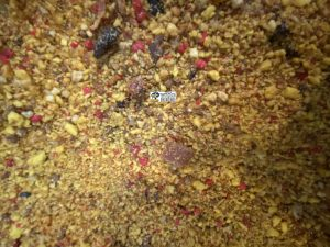 مکمل پودری مخلوط پروتئینی لارو حشرات عسل تخم مرغ میوه استوایی