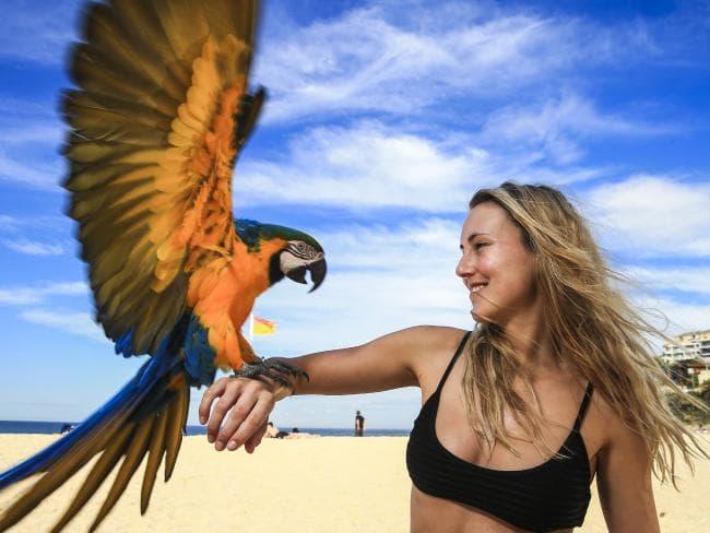 لذت پرواز آزاد برای طوطی ها