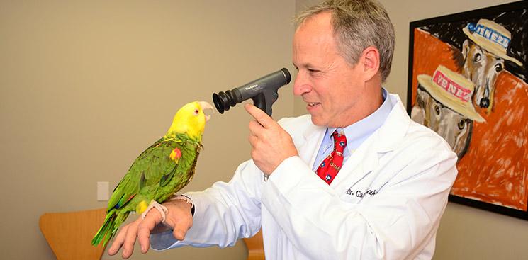دامپزشک طوطی پرندگان زینتی