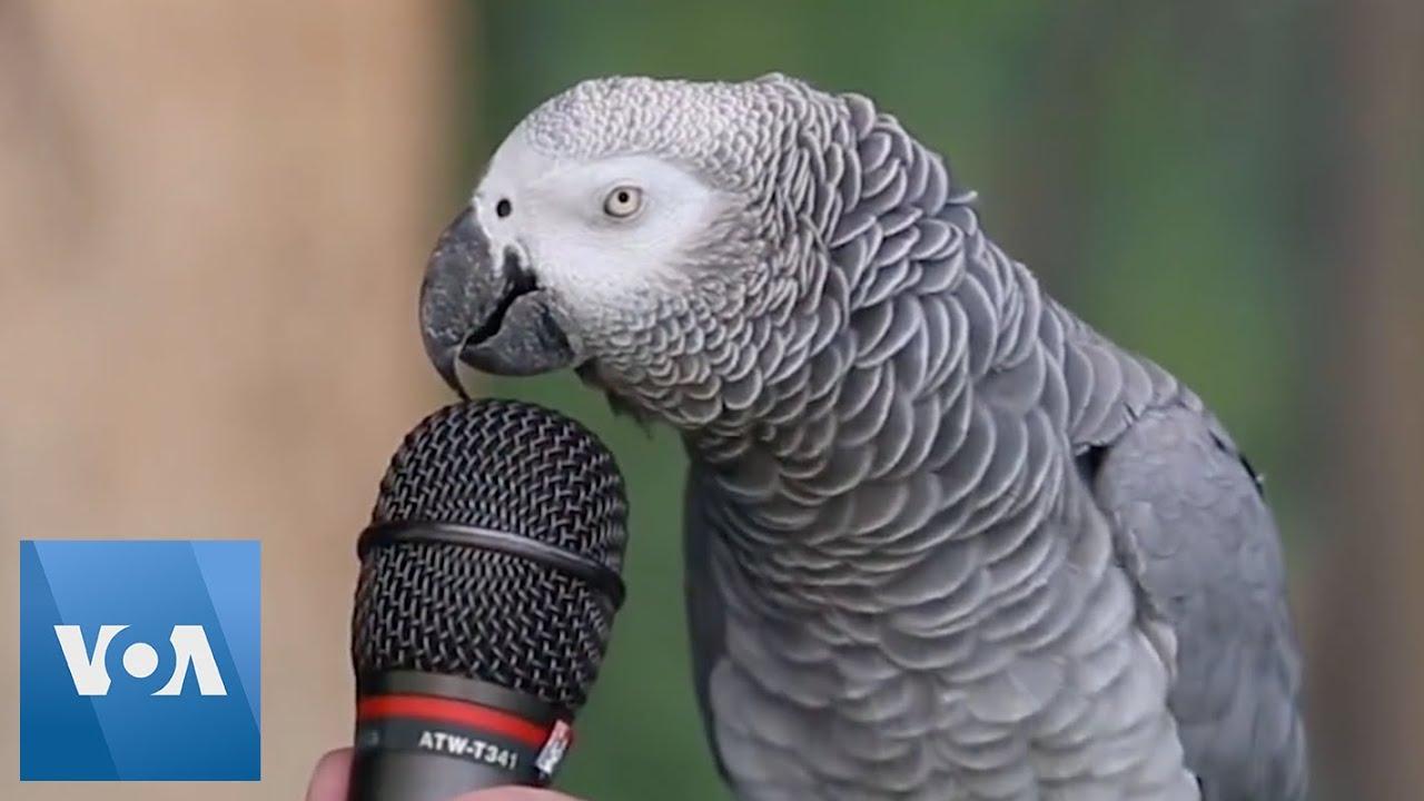 اموزش حرف زدن به طوطی
