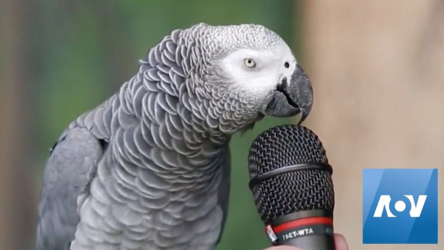 طوطی سخنگو اموزش