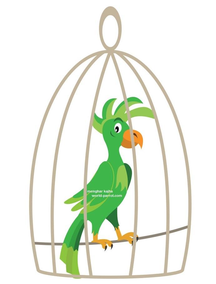 طوطی ها و پرندگان وابسته به قفس و راه درمان