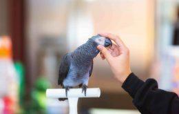 الرژی و حساسیت به طوطی پرنده زینتی