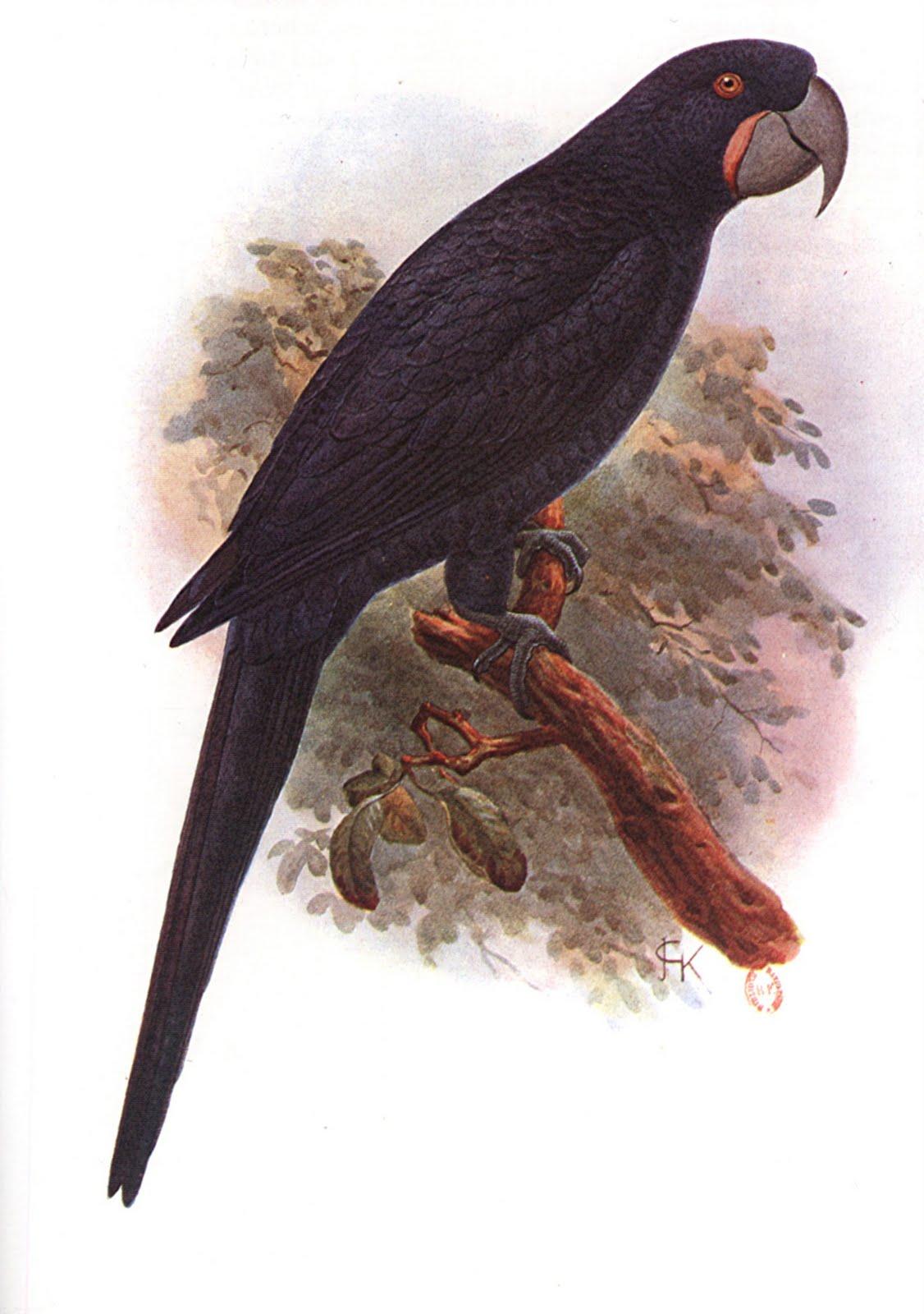 Extinct Violet Macaw