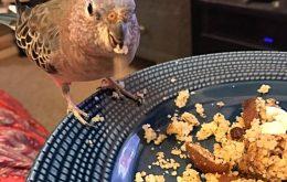تاثیر عناصر غذایی سلامت طوطی