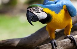 amoozesh-tooti-2t-tricks-bird