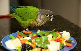 Carrots parrots food
