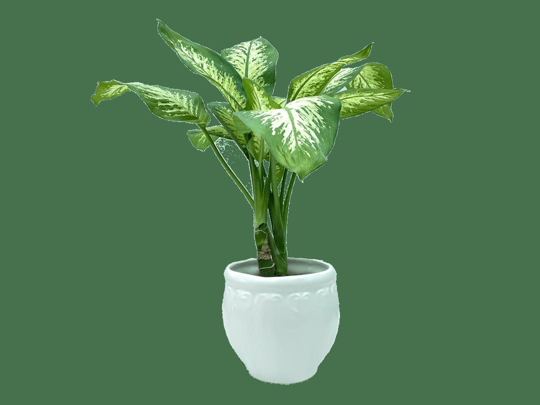 گیاهان آپارتمانی سمی برای طوطی ها